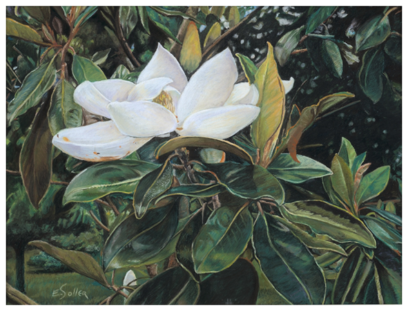 Magnolia, Original pastel painting by the fine artist Eric Soller